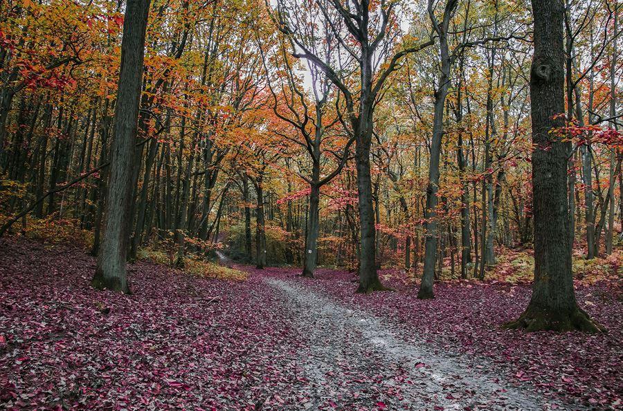 Image de la catégorie Remorque forestière