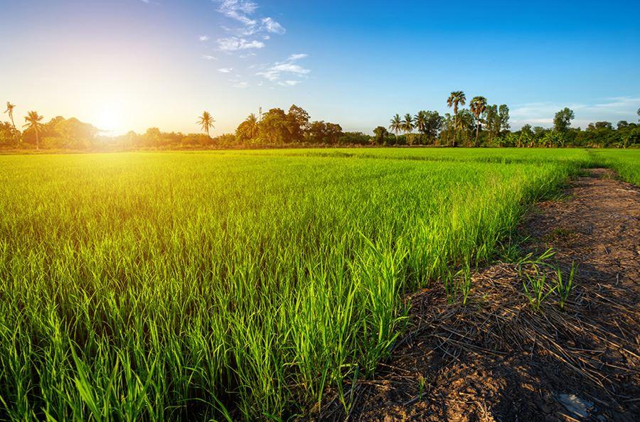Image de la catégorie Contrôleurs d'humidité Grain - Foin - Fourrage